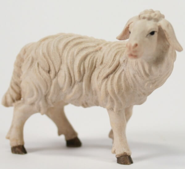 Kostner-Krippe - Schaf stehend rechtsschauend