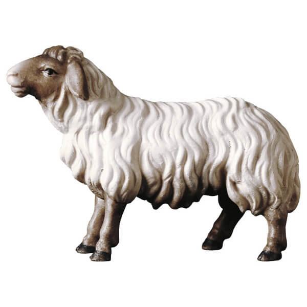 Hirten Krippe - Schaf geradeaus schauend Kopf dunkel