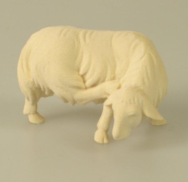 Heiland-Krippe - Schaf äsend und kratzend