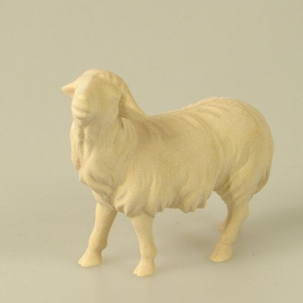 Heiland-Krippe - Schaf geradeaus schauend