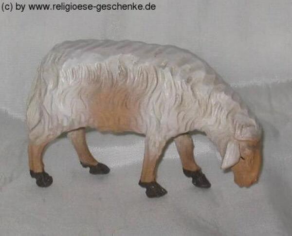 Carolus-Krippe - Schaf äsend