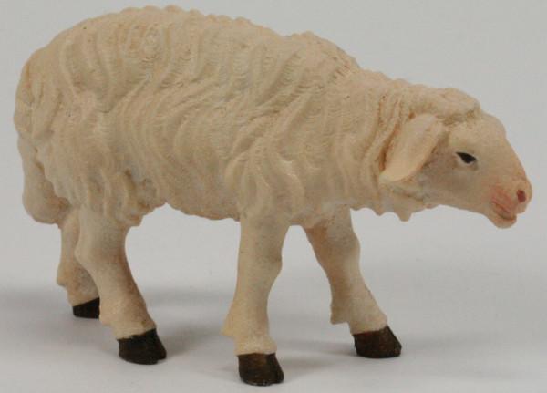 Kostner-Krippe - Schaf stehend vorwärtsschauend