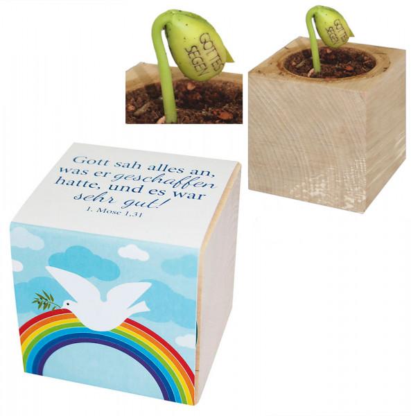 Pflanzwürfel - Regenbogen & Bohnenranke